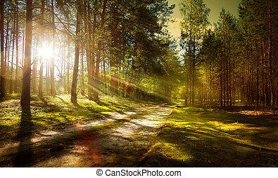 piste, forêt, pin
