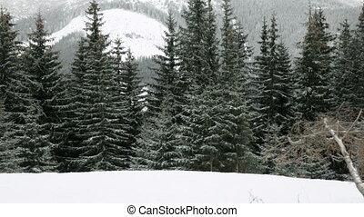 Piste in Tatras