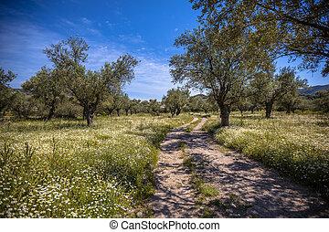 piste, olive, par, bosquet
