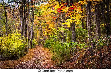 piste, pennsylvania., automne, parc, couleurs, long, york, nixon