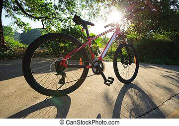 piste, vélo, ensoleillé, forêt, équitation