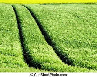 pistes, colza, récolte