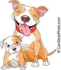 pit-bull, cachorro, madre