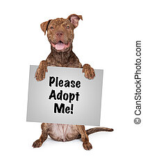 Pit Bull Cross Holding Blank Sign