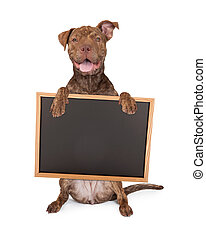 Pit Bull Cross Holding Chalk Board