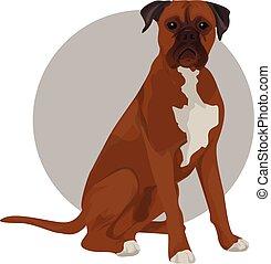 pit bull dog - brown