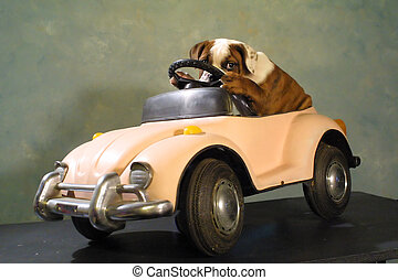 Pit bull puppy hidin