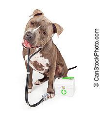 Pit Bull Veterinarian Dog
