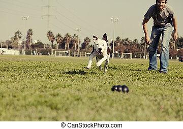 pitbull, 後で走る, 犬, おもちゃをかみなさい, 型