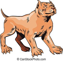 Pitbull Dog Mongrel Standing Etching
