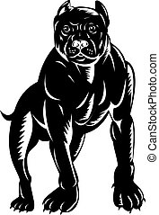 Illustration of a black pitbull full frontal view isolated on white background