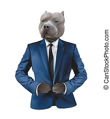 Pitbull in man suit on white background