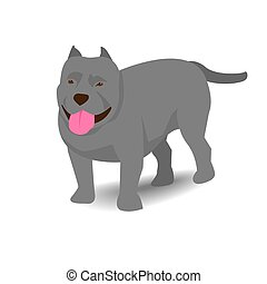 Pitbull with shadow on white background