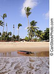 pititinga, jangada, (rn, praia, brazil)