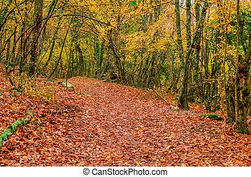 pittoresco, foglie, parco, autunno, percorso, caduto, vuoto
