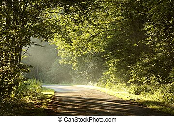 pittoresque, route rurale, à, aube