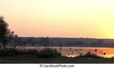 pittoresque, slo-mo, sur, voler, lac, coucher soleil, rugueux, colombes