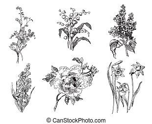 pivoine, lis, pas, lilas, tulipes, vallée, jonquilles, me, oublier, jacinthe