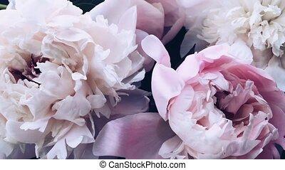 pivoine, vacances, mariage, fleur, floral, pastel, fleurs, ...