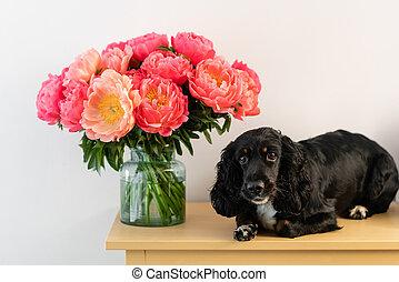 pivoines, beau, chien, fleurs, pivoine, shop., corail, espace, verre, delivery., russe, mensonges, noir, épagneul, floral, copie, vase.