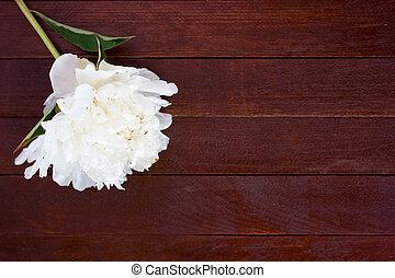 pivoines, bois, fleurs blanches, table