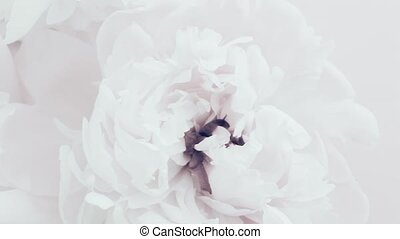pivoines, fleur, floral, pivoine, vacances, noce blanche, ...