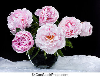 pivoines, rose, beau