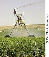 pivote, irrigación, centro