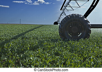 pivote, ruedas, irrigación, centro