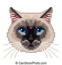 Bello Gatto Siamese