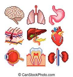 Pixel human body parts icons vector