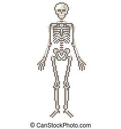 Pixel human skeleton vector