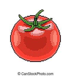 Pixel tomato fruit detailed illustration isolated vector