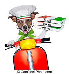 pizza delivery dog with a stack of pizza boxes on a...