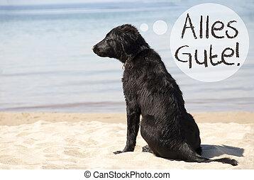 pláž, alles, majetek, pes, přá si, písečný, gute, nejlépe