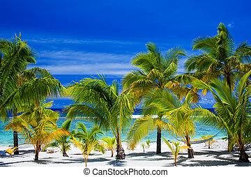plaża, dłoń drzewa, zdumiewający, przód