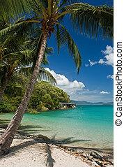 plaża, dłoń drzewo
