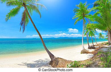 plaża, dłoń, tropikalny, panoramiczny, orzech kokosowy