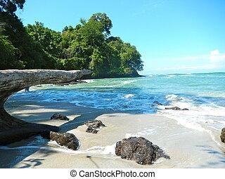 plaża, i, tropikalny, morze, z, jasny polewają