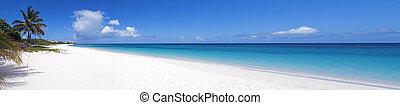 plaża., karaibski