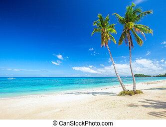 plaża, panoramiczny, tropikalny, kokosowa dłoń