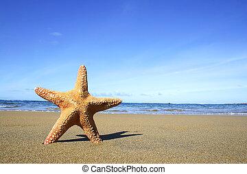 plaża, rozgwiazda