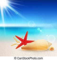 plaża, rozgwiazdy, powłoki