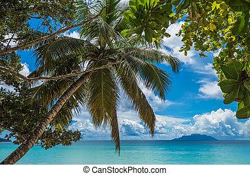 plaża, seychelles, wyspa, amant, mahe, tropikalny, vallon,...