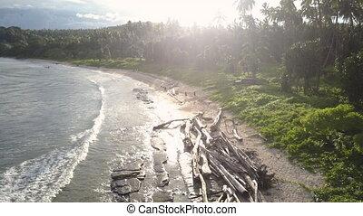 plaża, strzał, drzewa