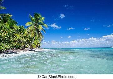 plaża, tropikalny