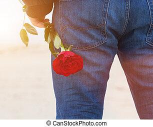 plaża, za, love., usługiwanie, człowiek, romantyk, jego, wstecz, data, róża