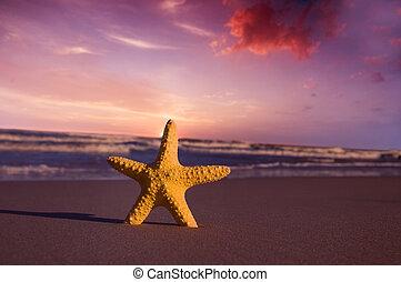 plaża, zachód słońca, rozgwiazda