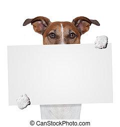 placeholder banner dog