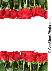 placement, roses, rang, vertical